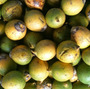 50 Sementes De Tucumã Para Cultivo