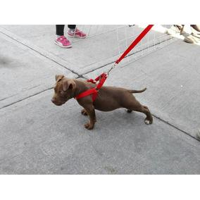 Pechera Para Cachorro Pitbull
