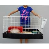 Jaula Nueva Para Cuyo O Conejo 70x40cm Base Plástico C/envío