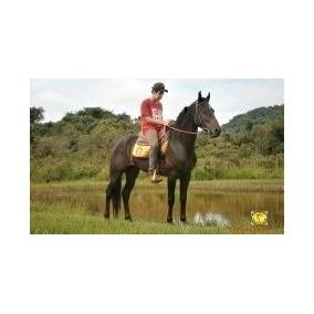 Cavalo Mangalarga Marchador Marcha Picada -