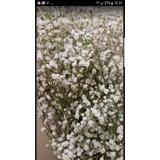Floreria Varas De Flores De Ilusion