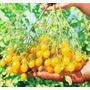 Tomate Uva Amarelo Sweet Grape Sementes Para Mudas