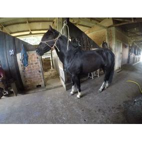 Vendo Lindo Cavalo Crioulo Registrado 04 Anos Piraquara/pr