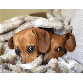 Cachorros Salchicha Mini Mini Muy Preciosos