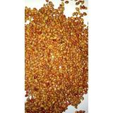 1 Kg Semente Milho Vassoura, Palha Clara E Macia