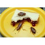 Cucarachas Y Chiripas: Insecticida Biológico