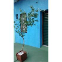 Bambu Mosso Artificial 2,70cm - Consulte Frete Via Cep