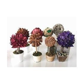 Topiárias De Folhas E Sementes (mini Árvores)