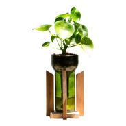 Cuchara Little Plant 24 Con Soporte