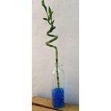 Botella Vidrio Plant Bambu Suerte Natural Adorno Casa Hogar