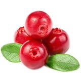 Semillas De Arandanos Rojos Únicas Y Raras En Arg !!!!!!!!!!