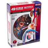Famemaster 4d-vision Modelo Sistema Reproductivo Masculino