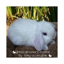 Minilop ( Granja De Conejos Enanitos)