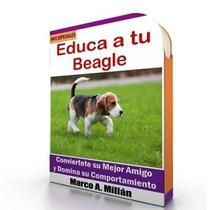 Como Educar A Un Beagle - Guía De Adiestramiento Raza Beagle