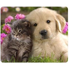 Animais De Gato Filhote De Cachorro Golden Retriever Filhote