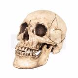 Cráneo Humano De Poliresina, Con Mandíbula Articulada
