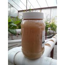 2 Frascos Jabón Potásico Insecticida Orgánico - Envío Gratis