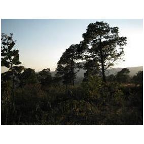 Terreno En El Mirador, Vista Real