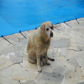 Capa Para Piscina 8x5 Lona Proteção Animais Caes Cachorros