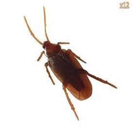 Leegoal 12- Falsos Errores Cucarachas Prank Novedad Cucarach