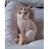 Gato Macho Castrado. Adopción Responsable Regalo En La Plata