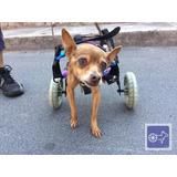 Sillas Andadores Para Perros O Gatos Discapacitados