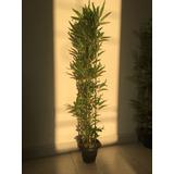 Planta Artificial Bambu Reto Com 4 Hastes 100cm Decoração