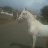 Vendese Um Cavalo Manga Larga15 Mil Reais Registrado
