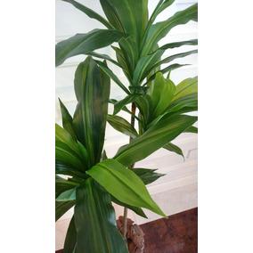 Planta Artificial-árvore Dracena Estilé 1,40mt Altura