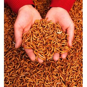 Tenebrios Molitor, 200 Larvas, Alimento Vivo Frete Gratis