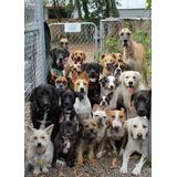Inseminacion Artificial Canina Zona Oeste Y Alrededores