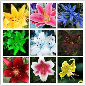 30 Sementes De Lindos Lírios Várias Cores Perfumados*****
