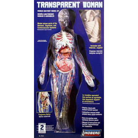 Cuerpo Humano Mujer Transparente Armable Con Base Giratoria