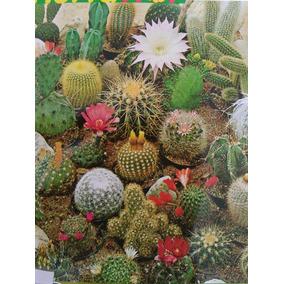 Semillas De Cactus Diversas Especies Diferentes.