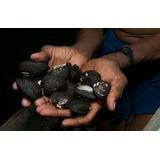 Conchas Negras Y Camaron