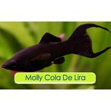 Peces Molly (acuario, Peces, Filtro, Pecera)