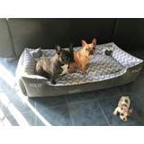 Cama Moises Perro Gato 1.50x75x35