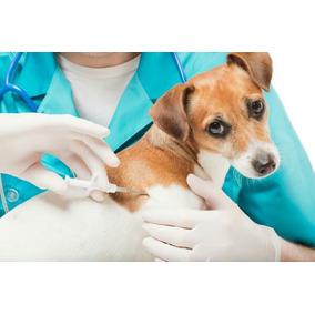 Microchip Mascotas(perros, Gatos, Caballos, Fauna Silvestre)