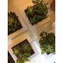 Cuadros Verdes Vivos Jardin Vertical