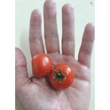 30 Semillas De Tomate Cherry Indio Dulce (organico)