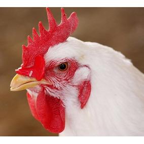 Óculos Anti Comer Penas Ovos Brigas Galos Galinhas Faisão