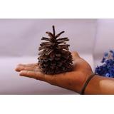 50 Pinha Fruto Do Pinheiro Decoração Artesanato Árvore Natal