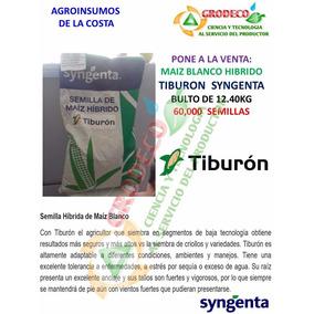 Maiz Blanco Hibrido Tiburon Syngenta 60000 Semillas