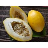 Maracuja Doce 25 Sementes Raras Passiflora Alata- Muito Doce