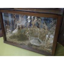 Taxidermia - Perdices - En Exhibidor De Vidrio