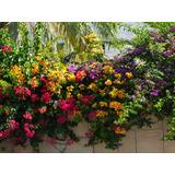 Santa Rita Varios Colores 5+abono!!!