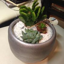 Cactus Centros De Mesa Para Todo Tipo De Eventos Sociales