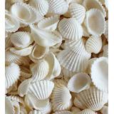 Conchas Marinas Blancas 2 Bolsas De 500 Grs