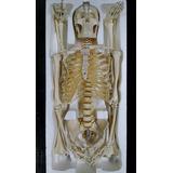 Esqueleto Humano 180cm Base Com Rodas Estudo Anatomia