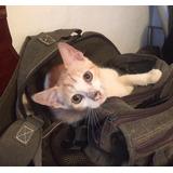 Gatito En Adopcion Pequeño Y Precioso